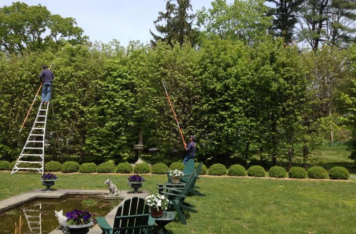 Tree Care: Pruning