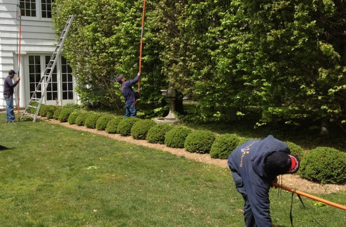 Tree Care: Pruning